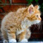Кошка-охотник