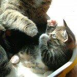 Спальня вашей кошки