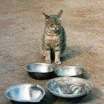Аппетит кошки