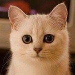 Обоняние у кошки