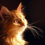 Кошки-врачеватели