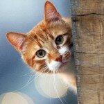 Психология кошки