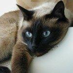 Кошка - сверхчеловек