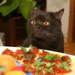 Советы по кормлению кошек
