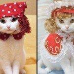 Модная одежда для кошек