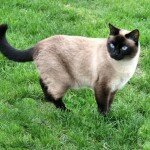Neighbours_Siamese