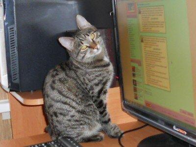 Галерея фото домашних кошек.