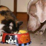 Кормление пожилых кошек