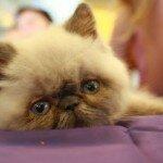 Провидческие способности кошек