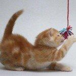 Игры с кошками