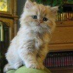 Поведение кошек в домашних условиях