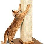 Кошка скребет дверь