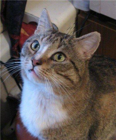 Кот-красавец, кот-великан. Чудо-кот. Кот из сказки.